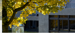 View of the university's Main Building with an autumnally yellow tree in the foreground.